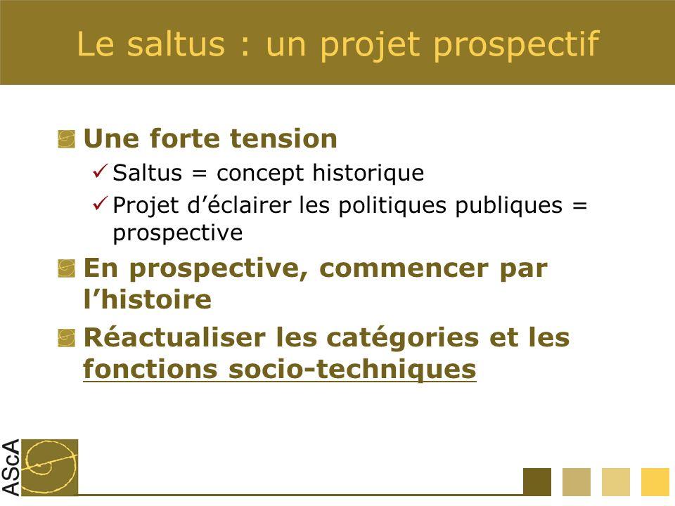 Le saltus : un projet prospectif