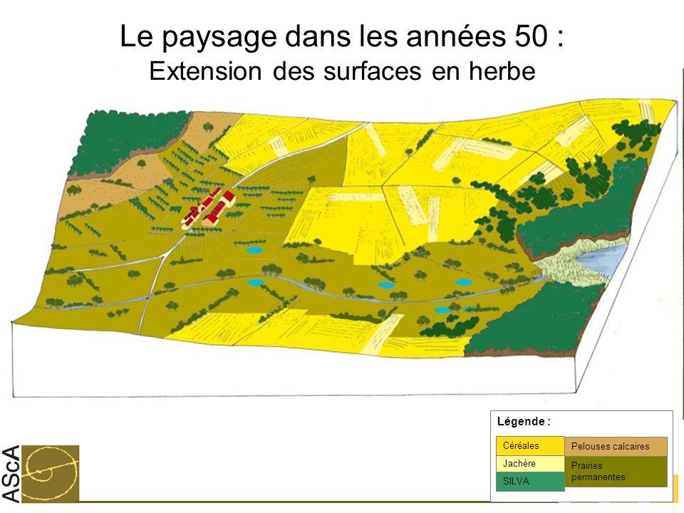 Le paysage dans les années 50 : Extension des surfaces en herbe