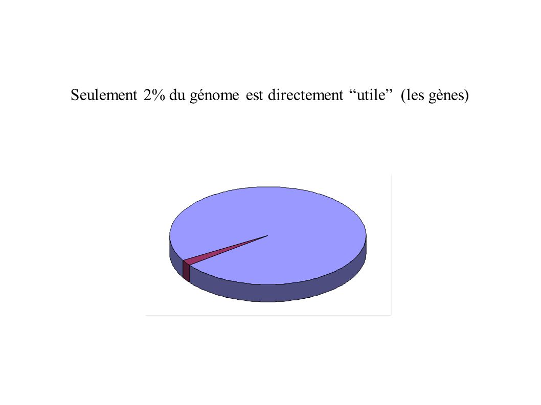 Seulement 2% du génome est directement utile (les gènes)