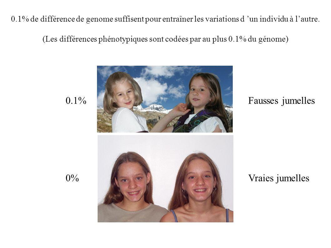 (Les différences phénotypiques sont codées par au plus 0.1% du génome)