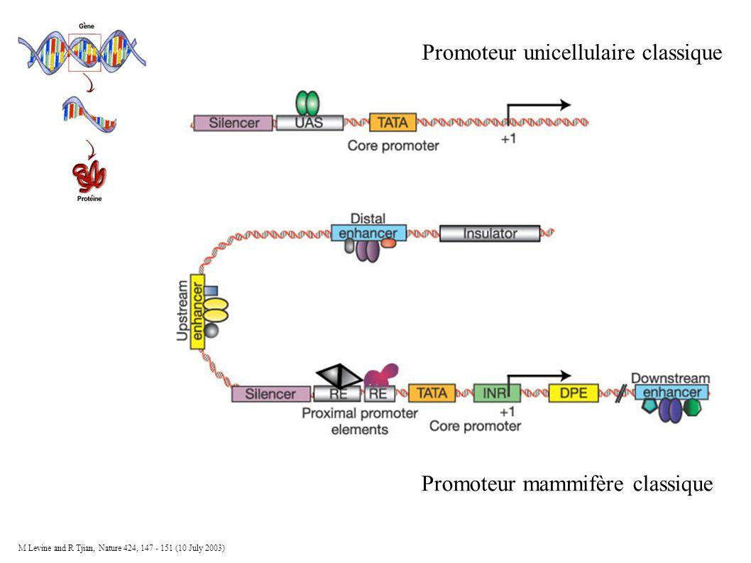 Promoteur unicellulaire classique