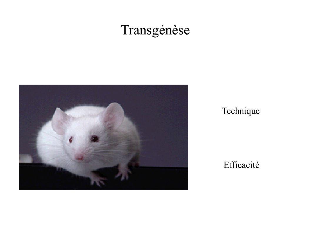 Transgénèse Technique Efficacité