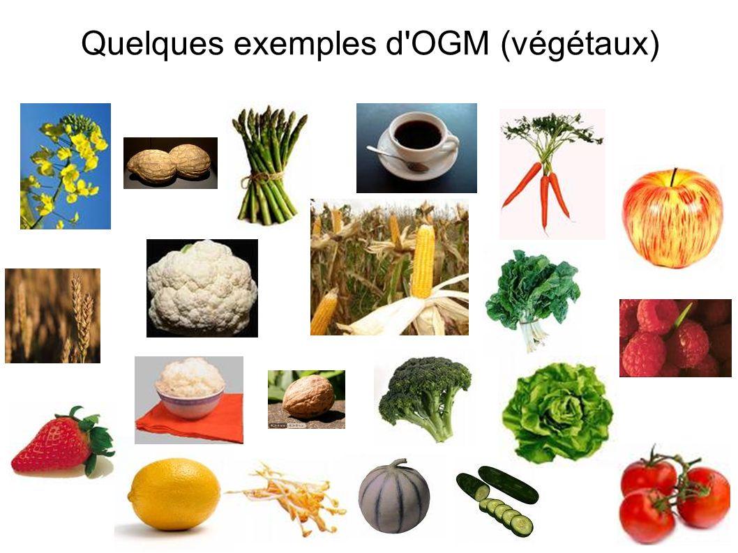 Quelques exemples d OGM (végétaux)
