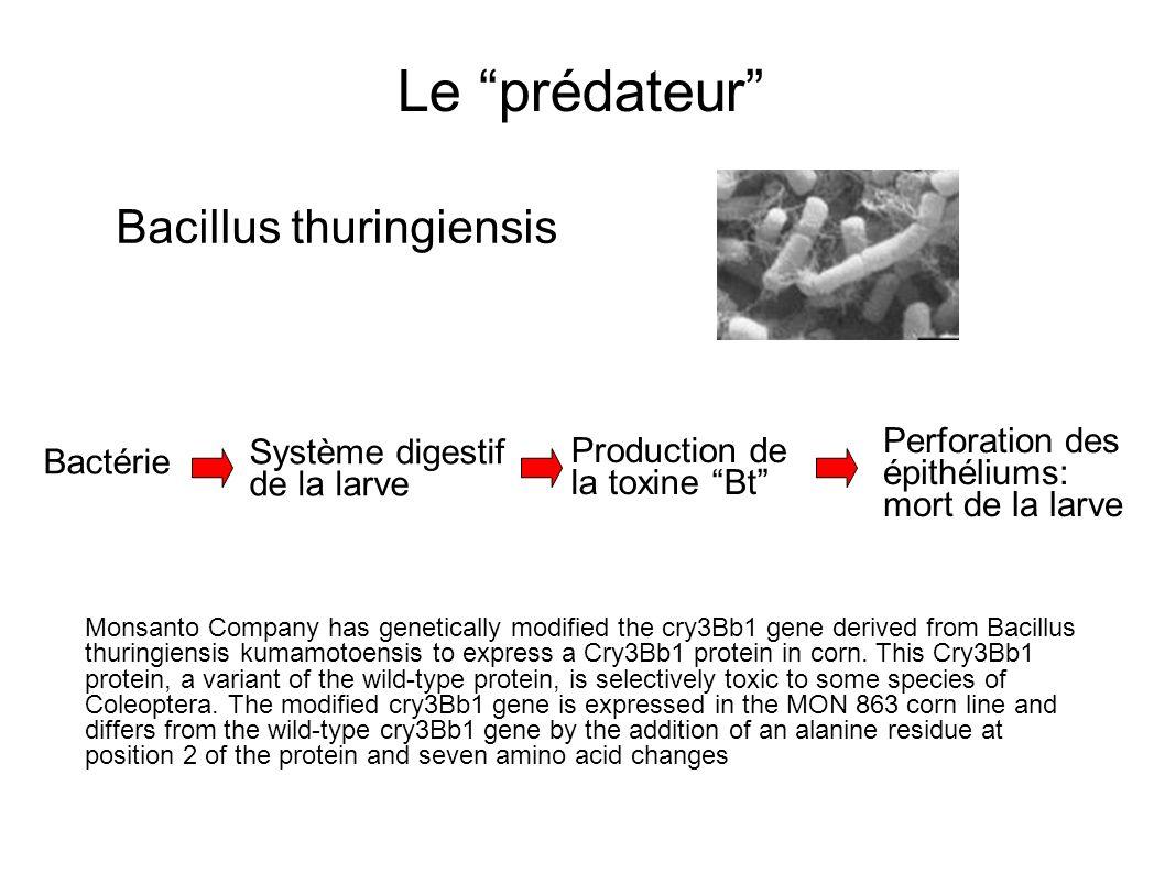 Le prédateur Bacillus thuringiensis