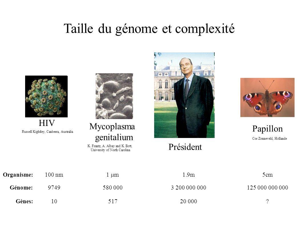 Taille du génome et complexité