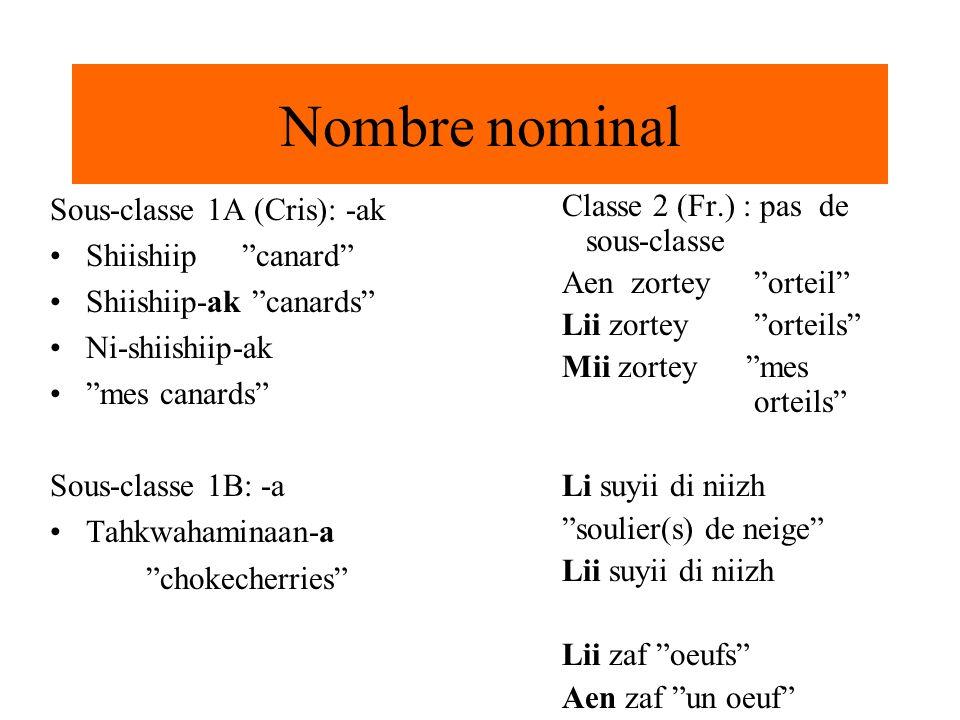 Nombre nominal Sous-classe 1A (Cris): -ak Shiishiip canard