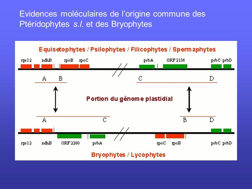 Evidences moléculaires de l'origine commune des Ptéridophytes s. l