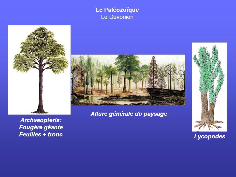 Allure générale du paysage