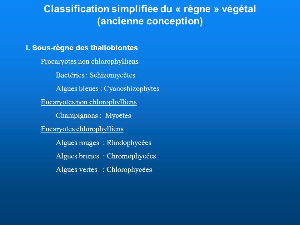 Classification simplifiée du « règne » végétal (ancienne conception)