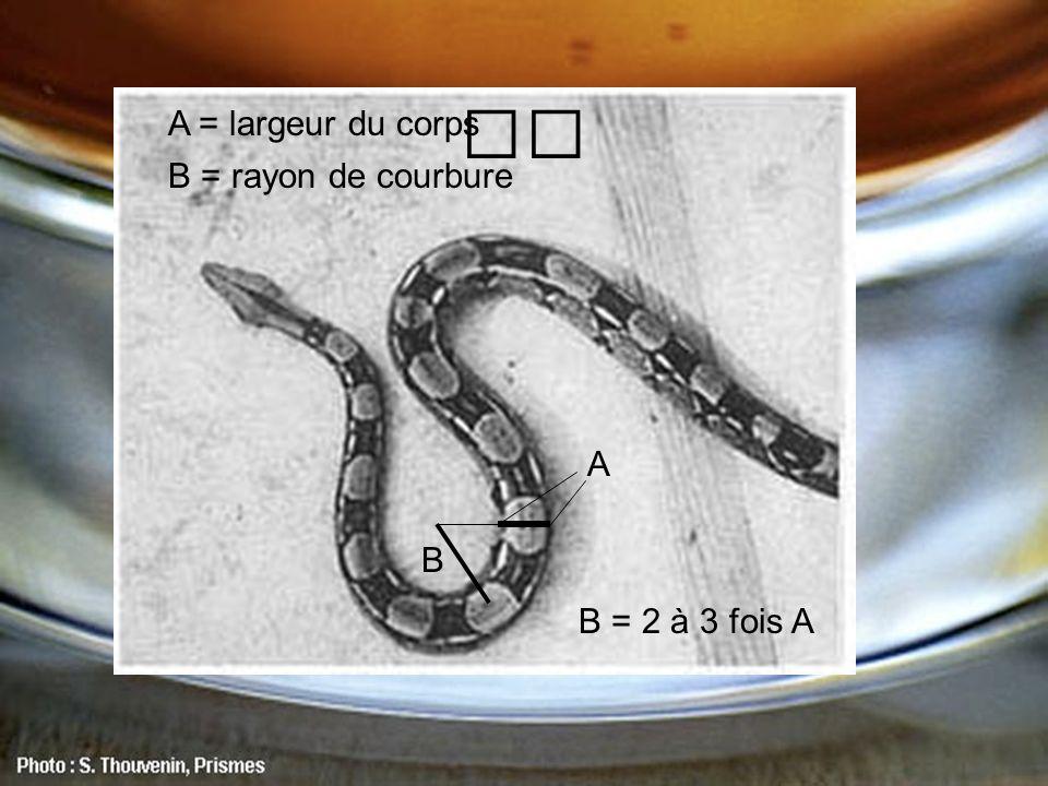 A = largeur du corps B = rayon de courbure A B B = 2 à 3 fois A