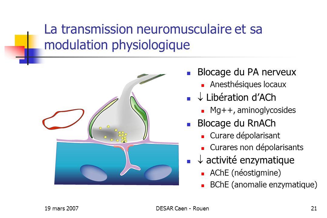 La transmission neuromusculaire et sa modulation physiologique