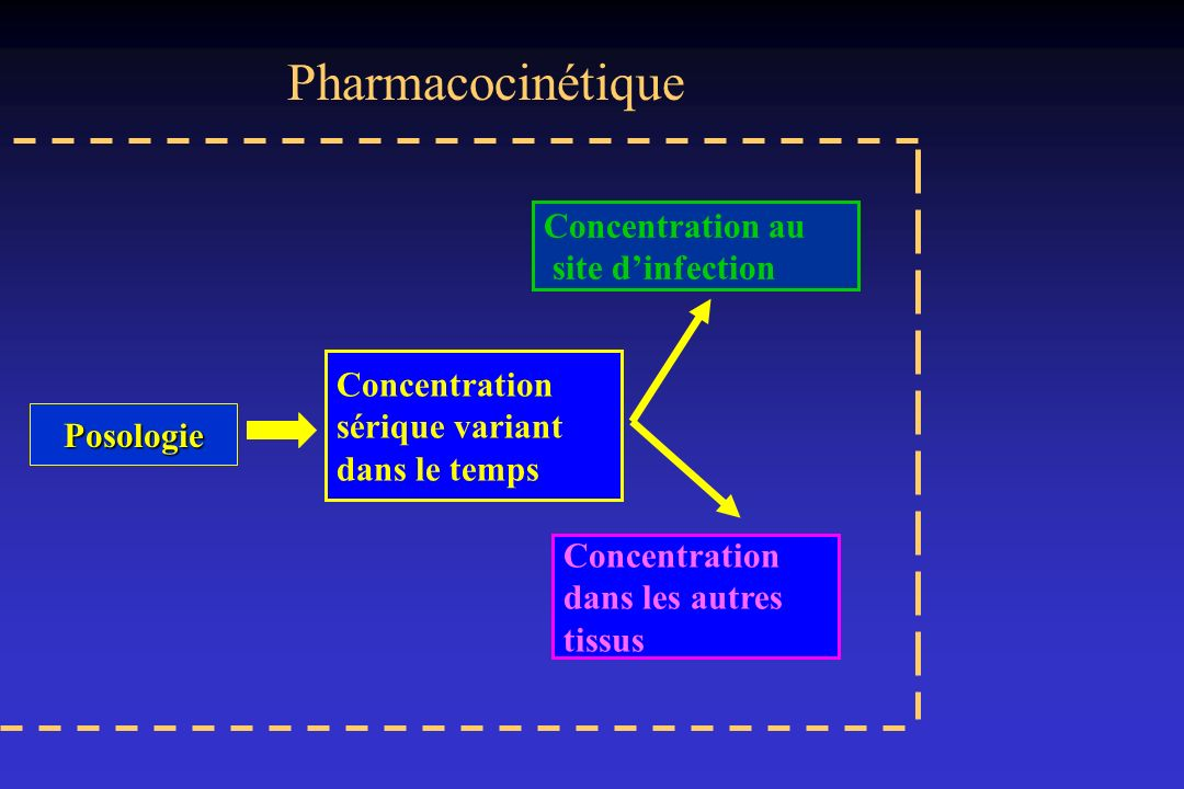 Pharmacocinétique Concentration au site d'infection Concentration