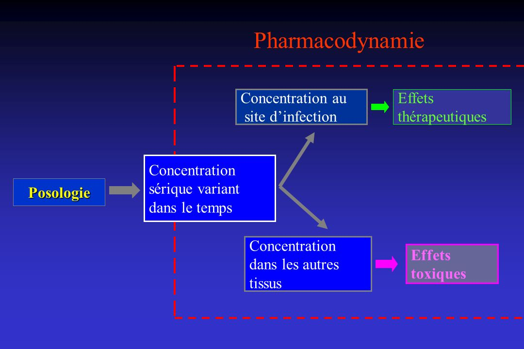Pharmacodynamie Concentration au site d'infection Effets