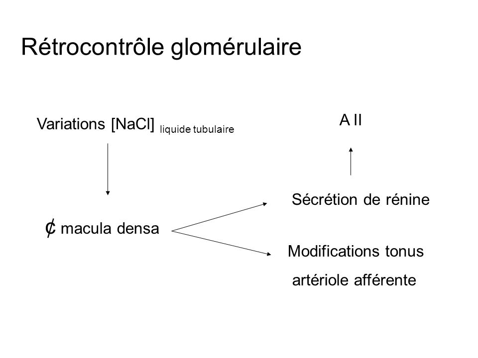 Rétrocontrôle glomérulaire