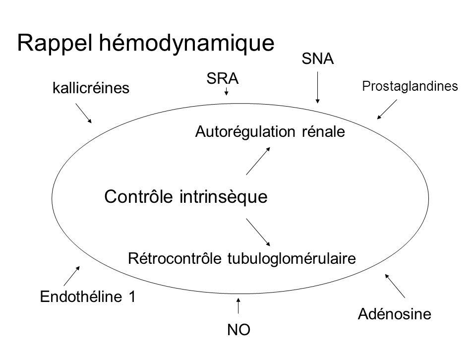 Rappel hémodynamique Contrôle intrinsèque SNA SRA kallicréines