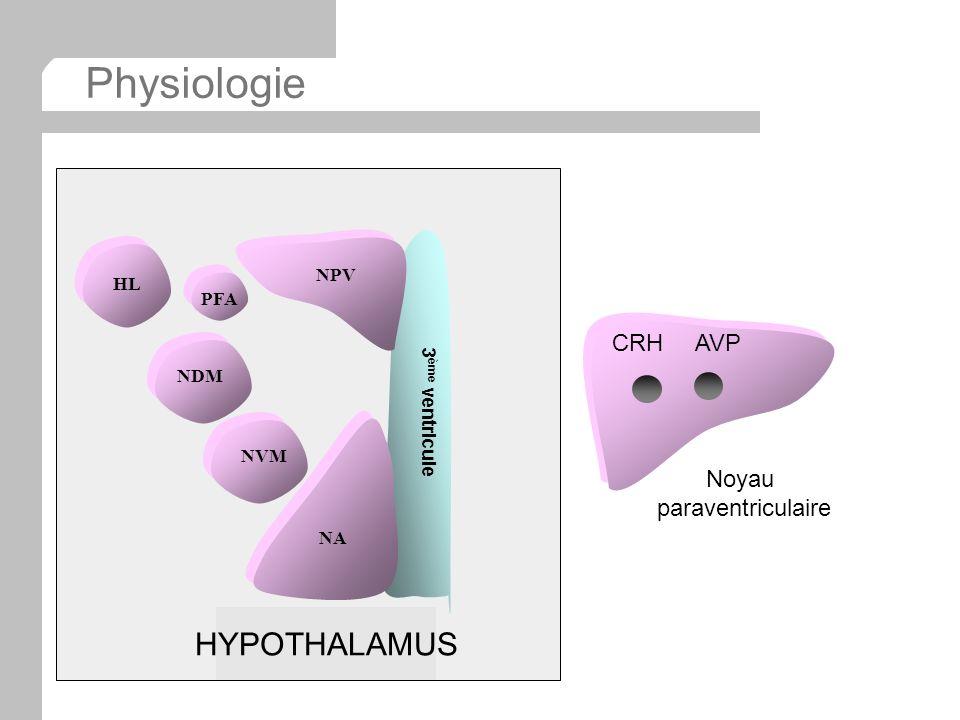 Physiologie HYPOTHALAMUS CRH AVP Noyau paraventriculaire NPV HL PFA
