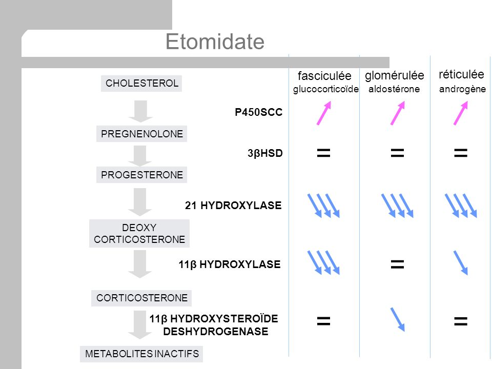 = = = = = = Etomidate fasciculée glomérulée réticulée P450SCC 3βHSD