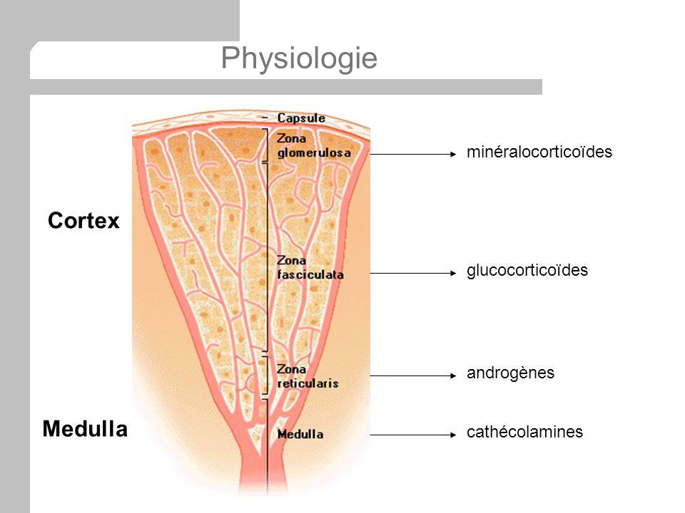 Physiologie Cortex Medulla minéralocorticoïdes glucocorticoïdes