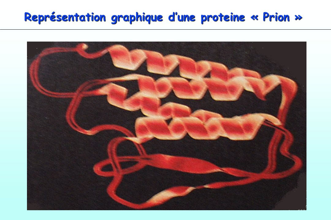 Représentation graphique d'une proteine « Prion »