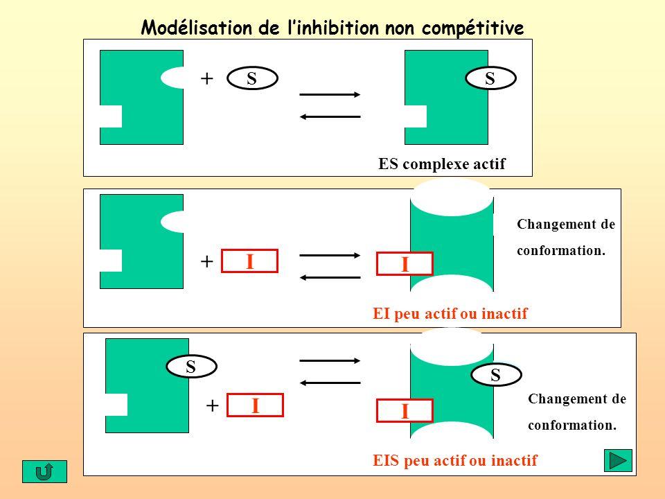 Modélisation de l'inhibition non compétitive