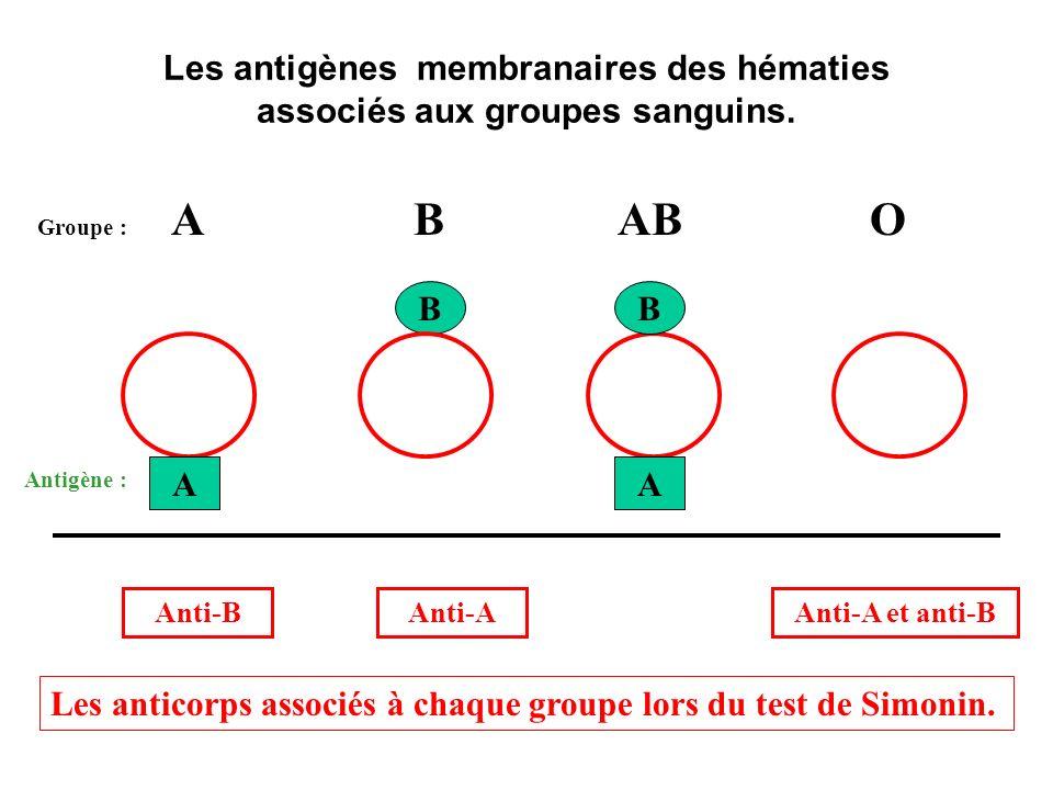 Les antigènes membranaires des hématies associés aux groupes sanguins.