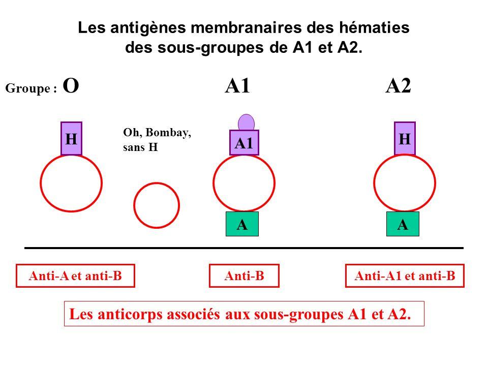 Les antigènes membranaires des hématies des sous-groupes de A1 et A2.