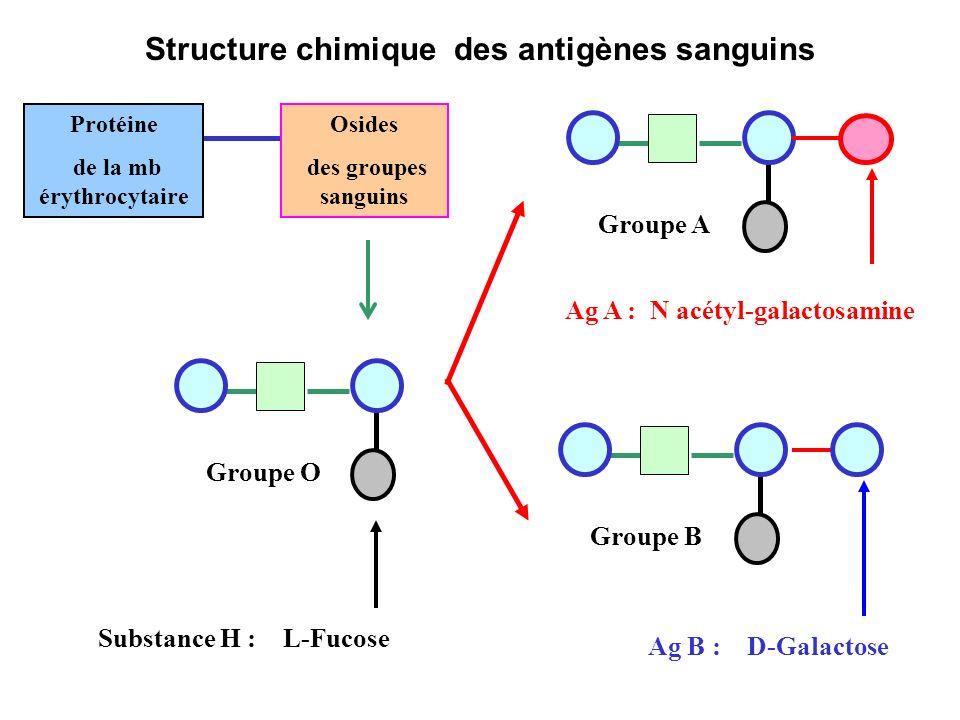 Structure chimique des antigènes sanguins