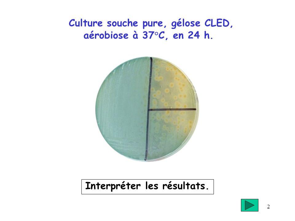 Culture souche pure, gélose CLED, aérobiose à 37°C, en 24 h.