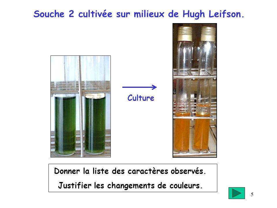 Souche 2 cultivée sur milieux de Hugh Leifson.