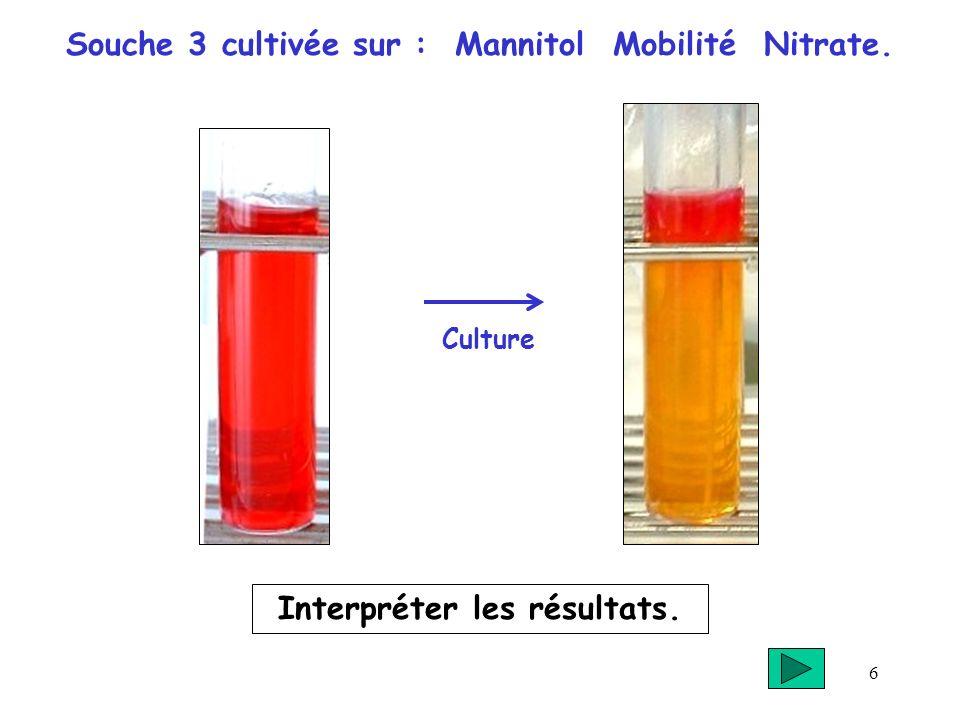 Souche 3 cultivée sur : Mannitol Mobilité Nitrate.
