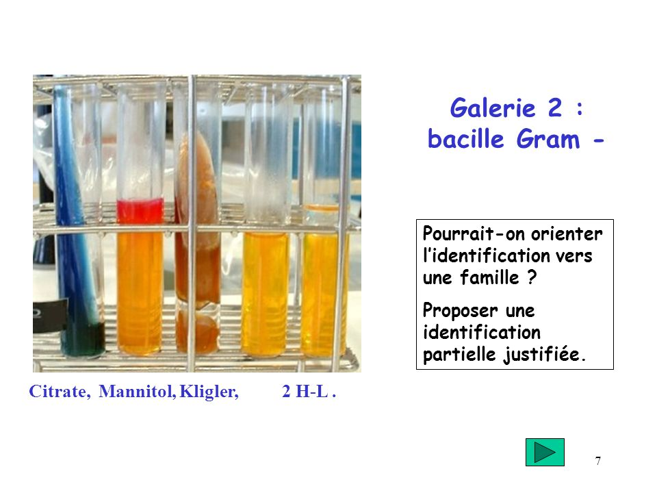 Galerie 2 : bacille Gram -