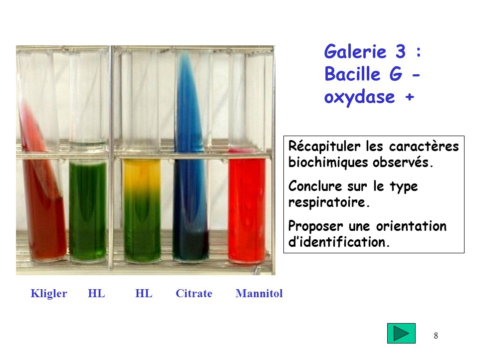 Galerie 3 : Bacille G - oxydase +