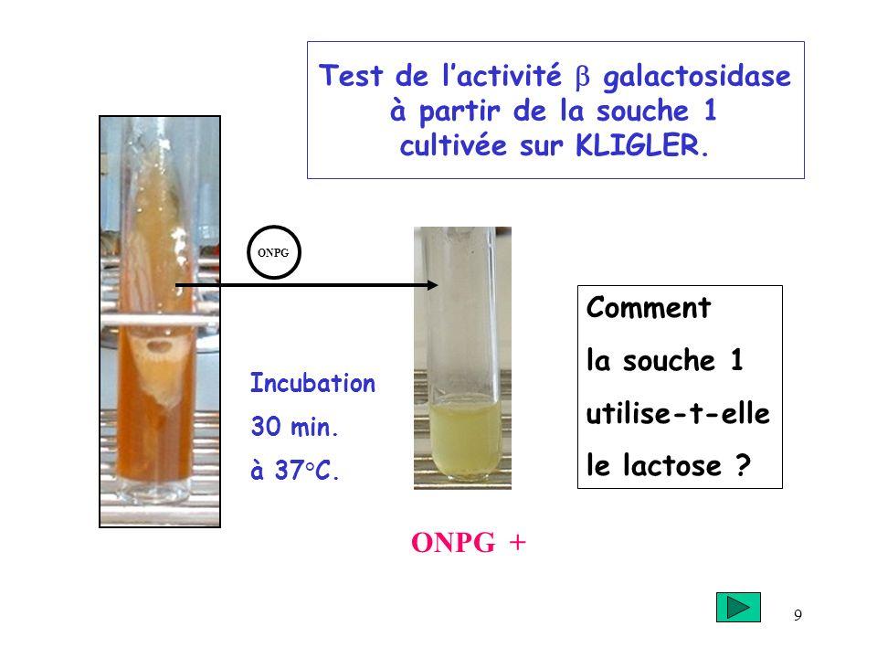 Test de l'activité b galactosidase à partir de la souche 1 cultivée sur KLIGLER.
