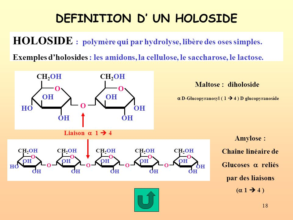 DEFINITION D' UN HOLOSIDE