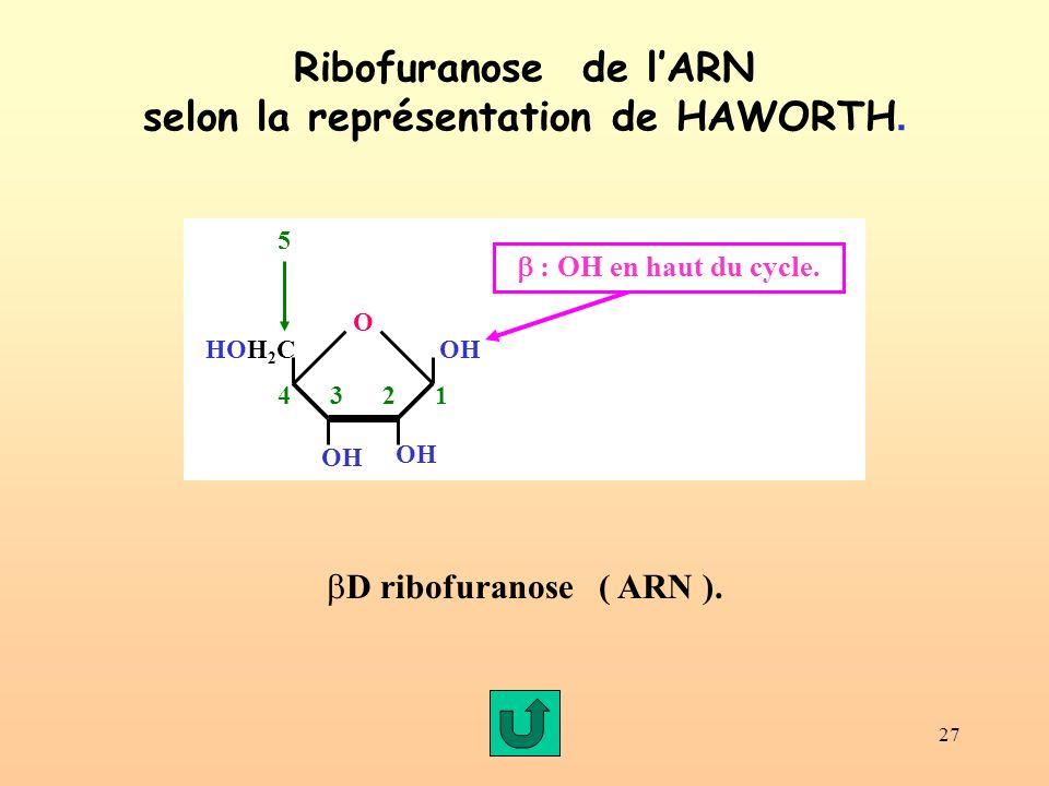 Ribofuranose de l'ARN selon la représentation de HAWORTH.