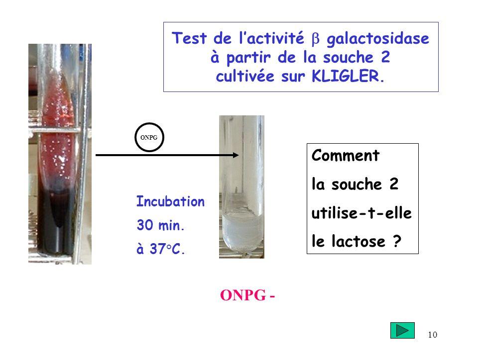 Test de l'activité b galactosidase à partir de la souche 2 cultivée sur KLIGLER.