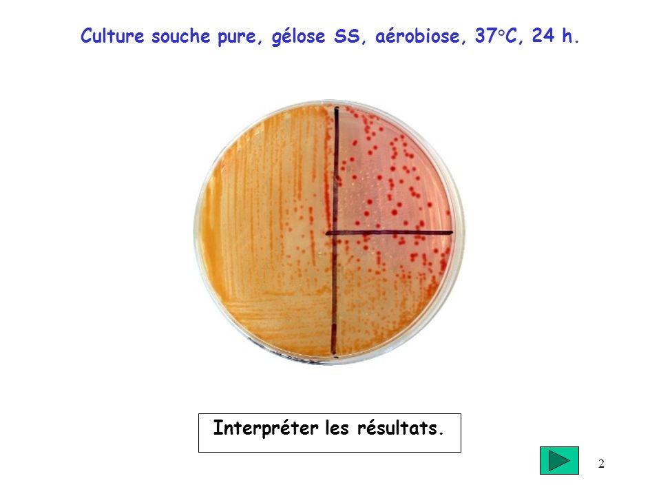 Culture souche pure, gélose SS, aérobiose, 37°C, 24 h.