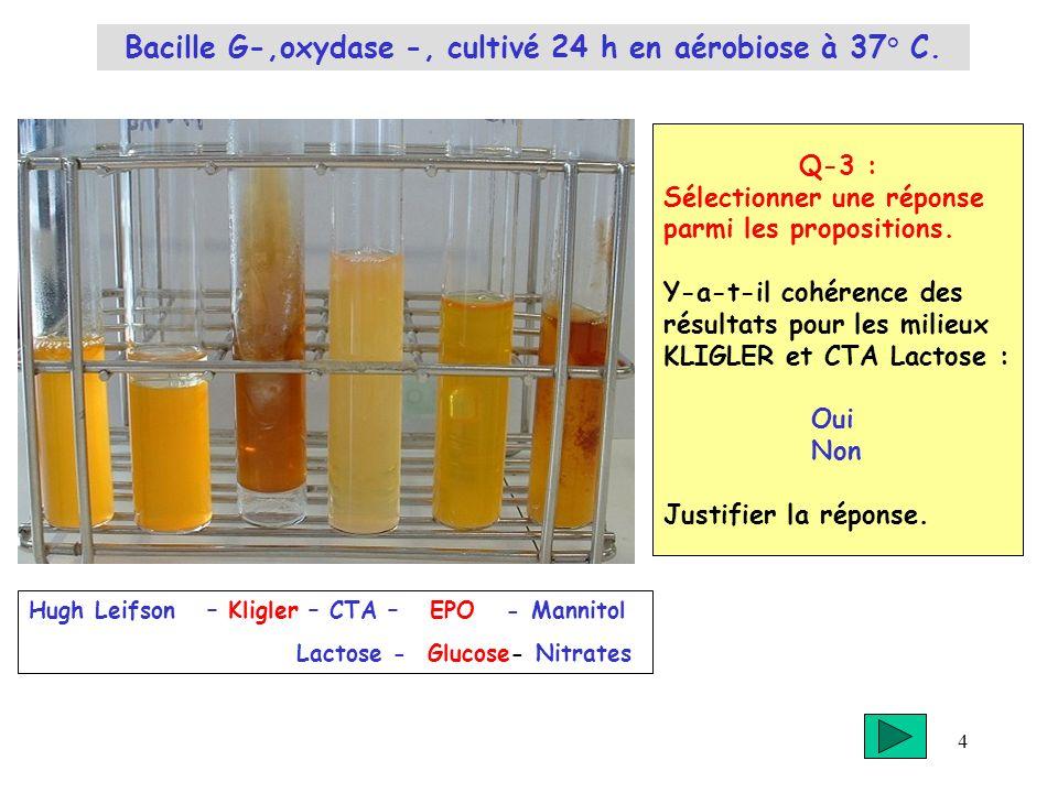 Bacille G-,oxydase -, cultivé 24 h en aérobiose à 37° C.