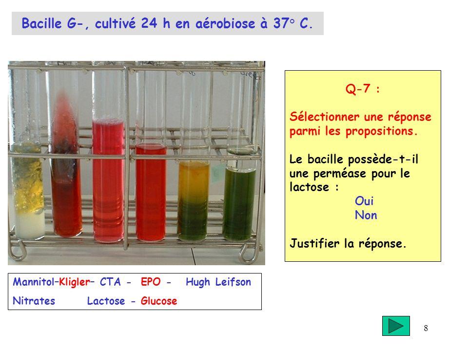 Bacille G-, cultivé 24 h en aérobiose à 37° C.