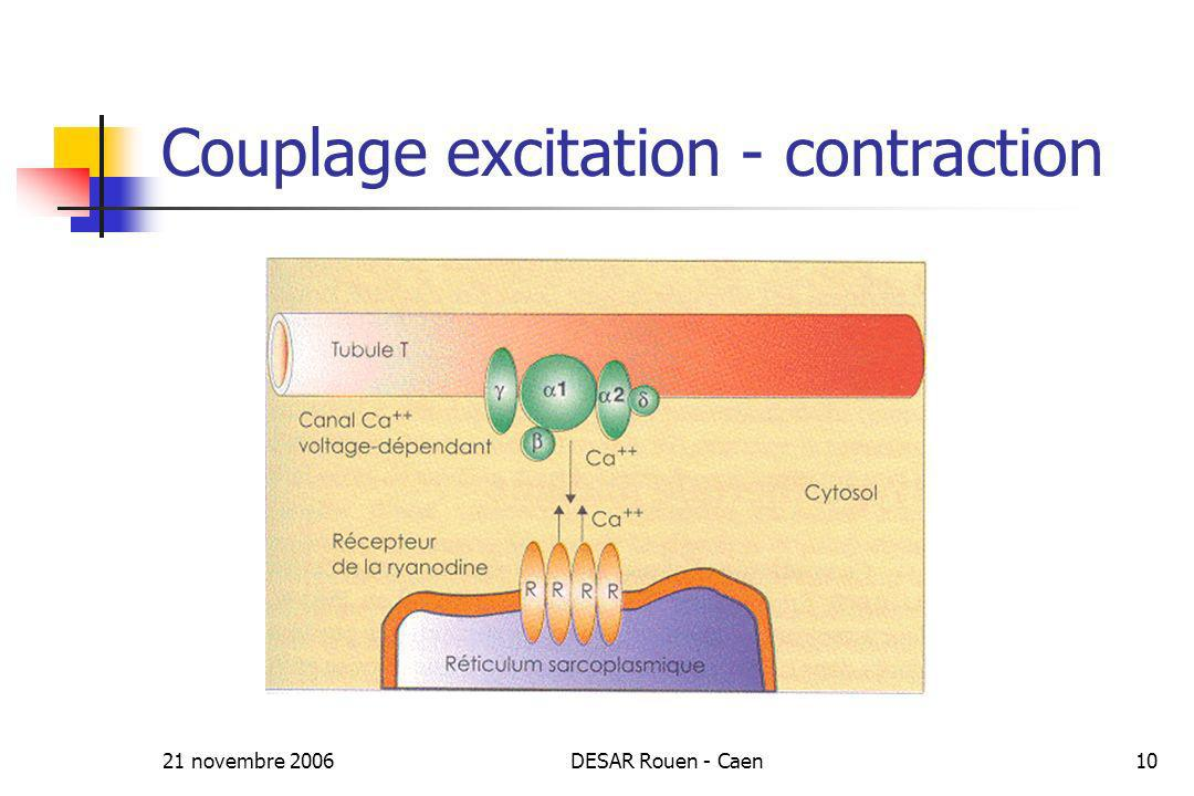Couplage excitation - contraction