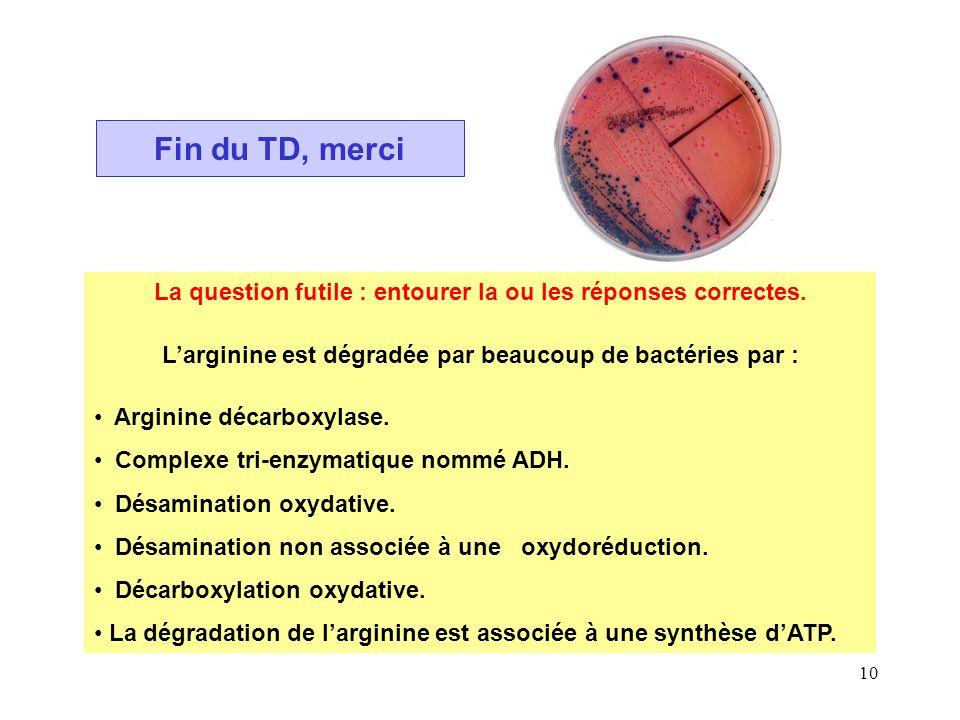 Fin du TD, merci La question futile : entourer la ou les réponses correctes. L'arginine est dégradée par beaucoup de bactéries par :