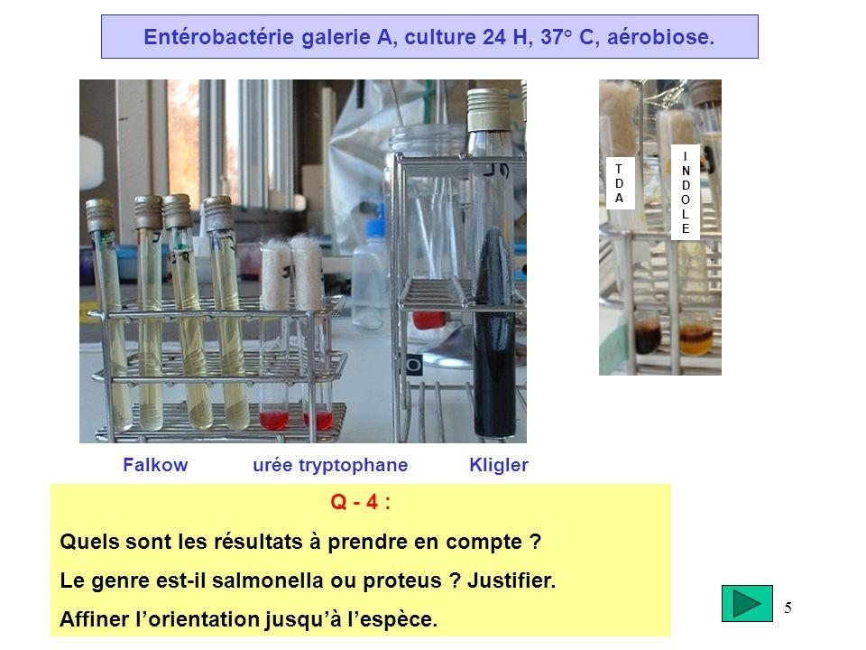 Entérobactérie galerie A, culture 24 H, 37° C, aérobiose.