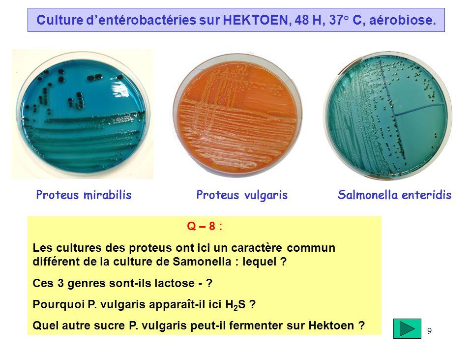 Culture d'entérobactéries sur HEKTOEN, 48 H, 37° C, aérobiose.