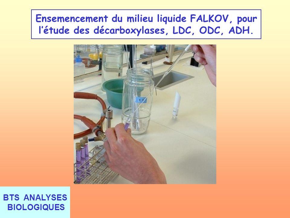 Ensemencement du milieu liquide FALKOV, pour l'étude des décarboxylases, LDC, ODC, ADH.