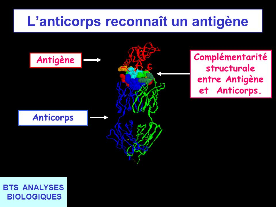 L'anticorps reconnaît un antigène