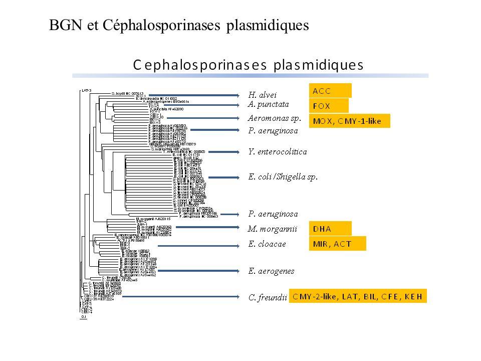 BGN et Céphalosporinases plasmidiques