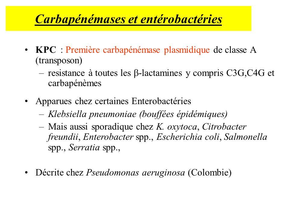 Carbapénémases et entérobactéries