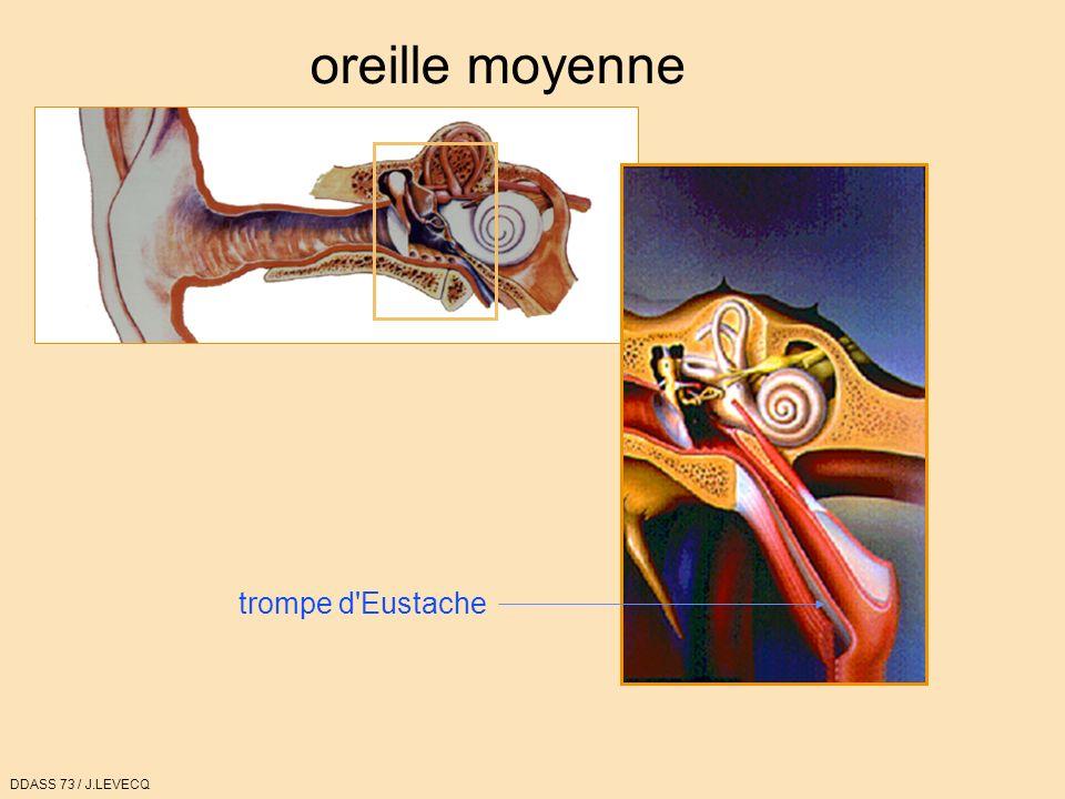 oreille moyenne trompe d Eustache