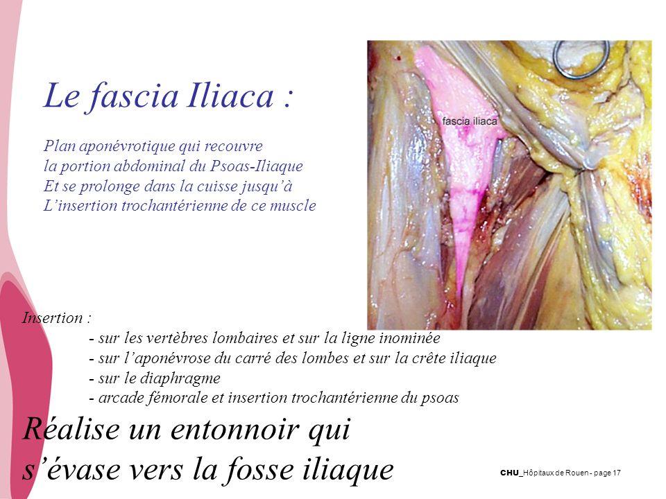 Le fascia Iliaca : Réalise un entonnoir qui