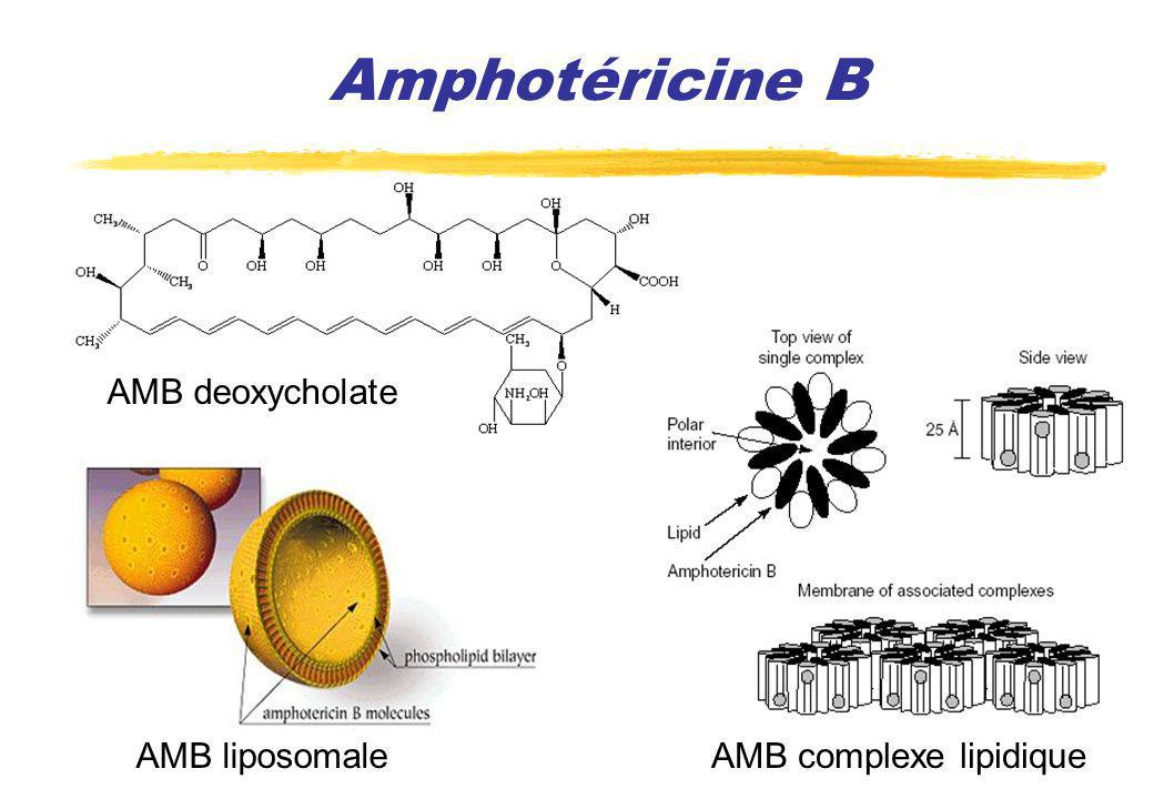Amphotéricine B AMB deoxycholate AMB liposomale AMB complexe lipidique